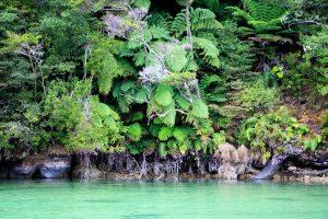 Grönt i en lagun